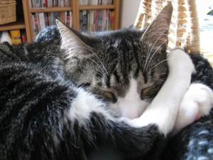 Кот спит в корзинке